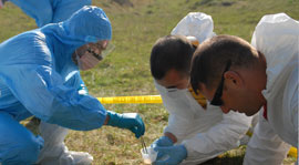Crime scene forensic team kneeling on grass collecting evidence